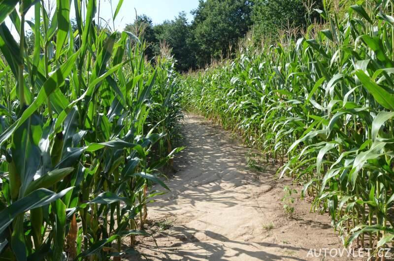 kukuřičné bludiště olomouc 2