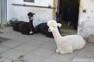 Lamy - stará Zoo Chleby