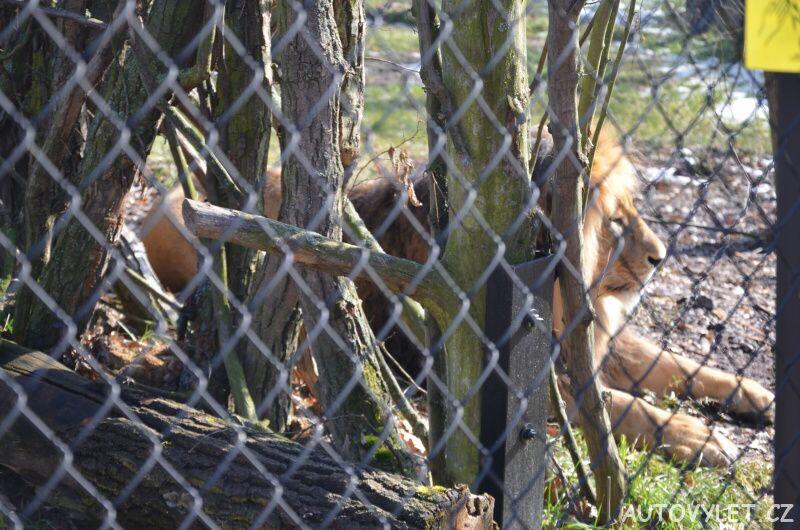 lev - zoo brno