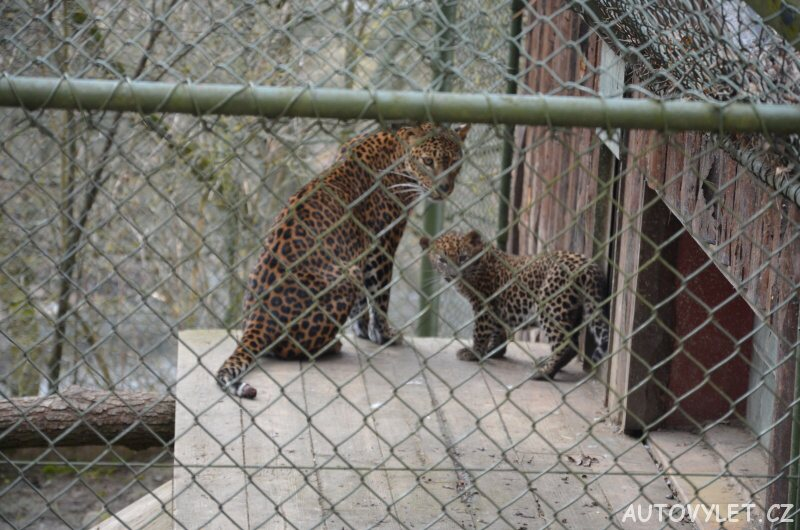 levharti - zoo brno