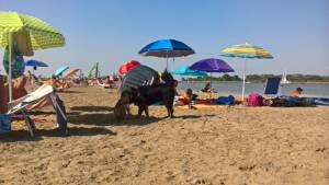 lignano sabiodoro itálie a psí pláž