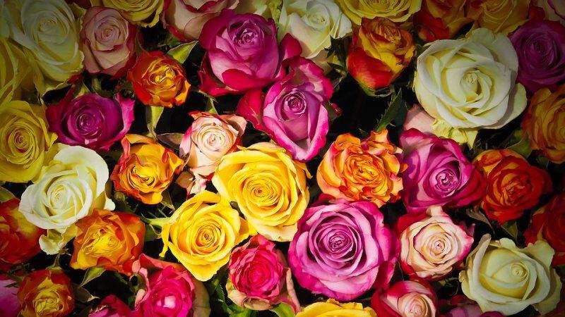 mdž květiny