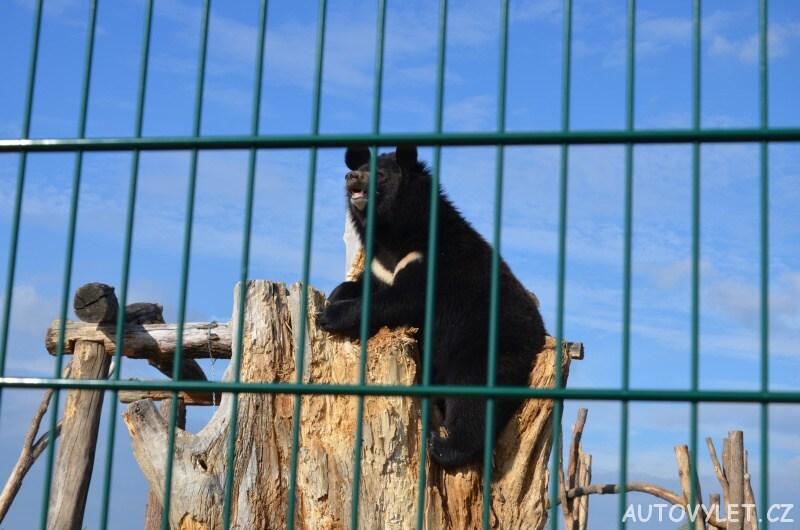 Medvěd na stromě - nová zoo Chleby