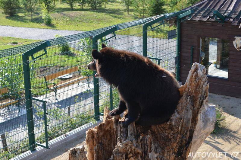 Medvěd - nová zoo Chleby