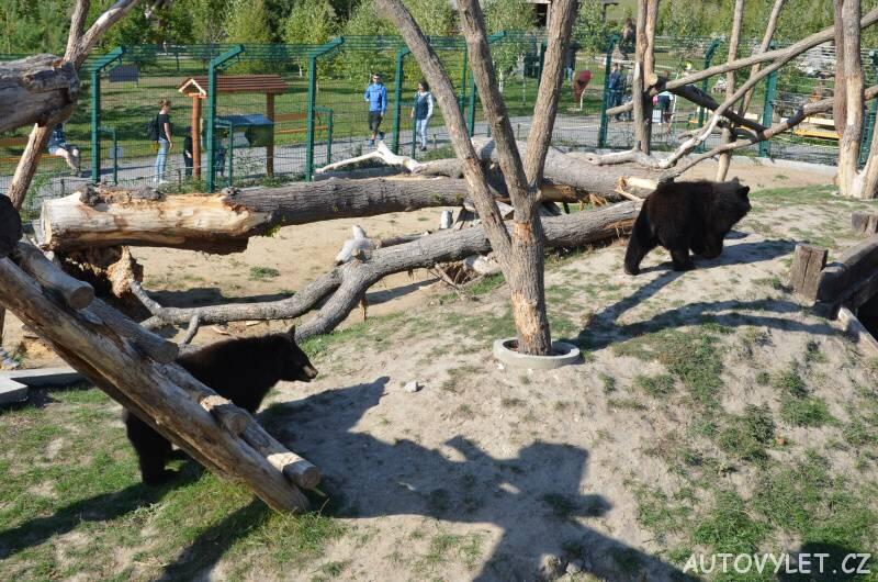 Medvědi - nová zoo Chleby