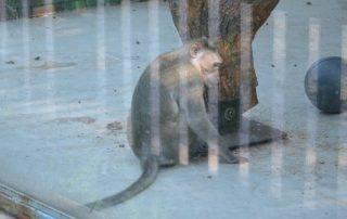 minizoo teplice makak kápový