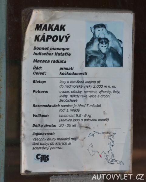 minizoo teplice makak kápový 4