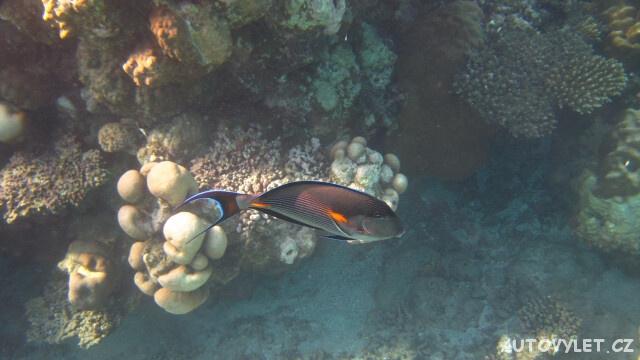 Moře v Egyptě 3