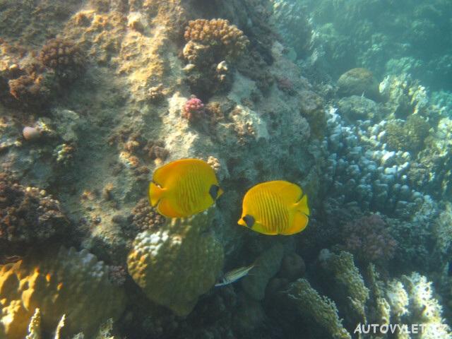 Moře v Egyptě 6