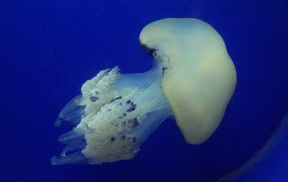 Mořské akvárium Pula Chorvatsko