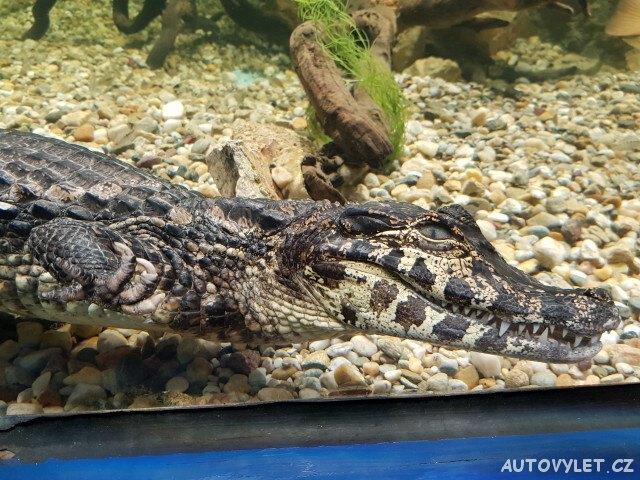 Mořské akvárium Pula Chorvatsko 3