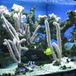 mořský svět praha holešovice