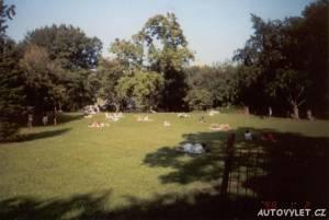 New York - central park 2