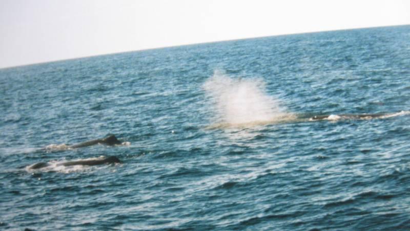 norsko velrybí safari