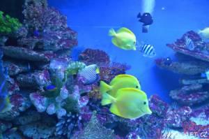 Oceanarium Miedzyzdroje Polsko 2