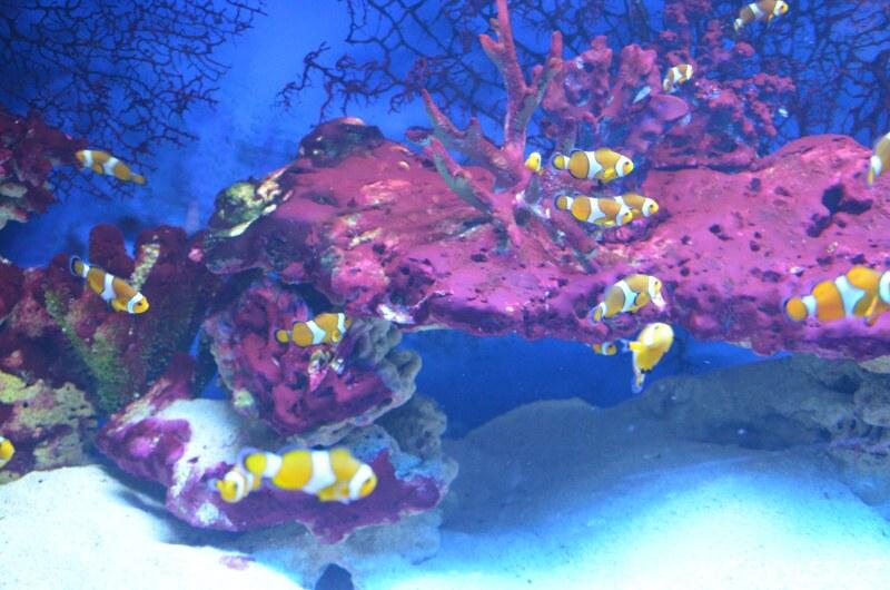 Oceanarium Miedzyzdroje Polsko 4