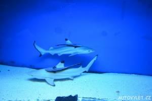 Oceanarium Miedzyzdroje Polsko 5