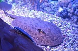 Oceanarium Miedzyzdroje Polsko 7
