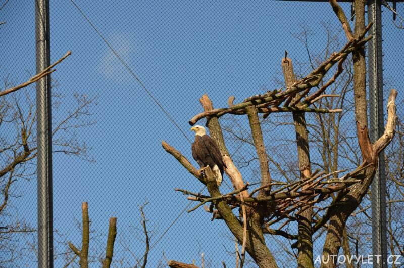 orel - zoo brno