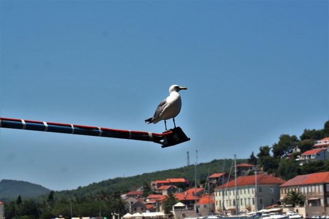 ostrov hvar chorvatsko 6