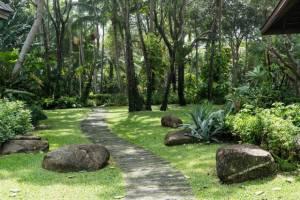 phuket džungle