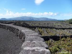 Pico vinice - Azorské ostrovy - Azory dovolená