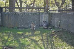 Podkrušnohorský zoopark Chomutov 05
