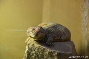 Podkrušnohorský zoopark Chomutov 08