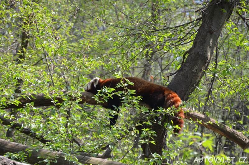 Podkrušnohorský zoopark Chomutov 10