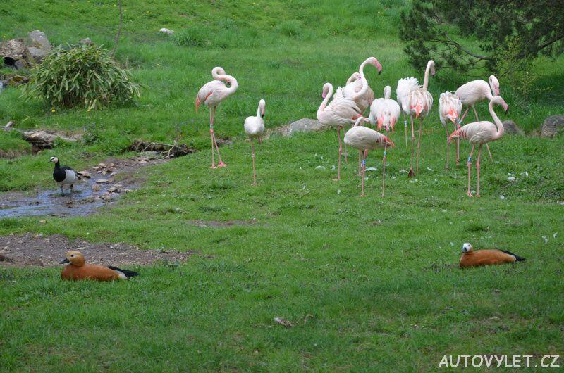 Podkrušnohorský zoopark Chomutov 15