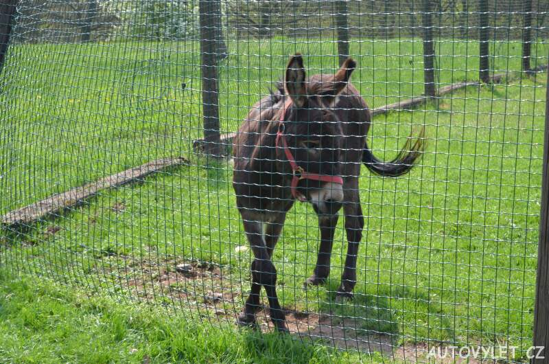 Podkrušnohorský zoopark Chomutov 18