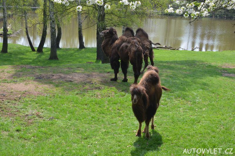 Podkrušnohorský zoopark Chomutov 19