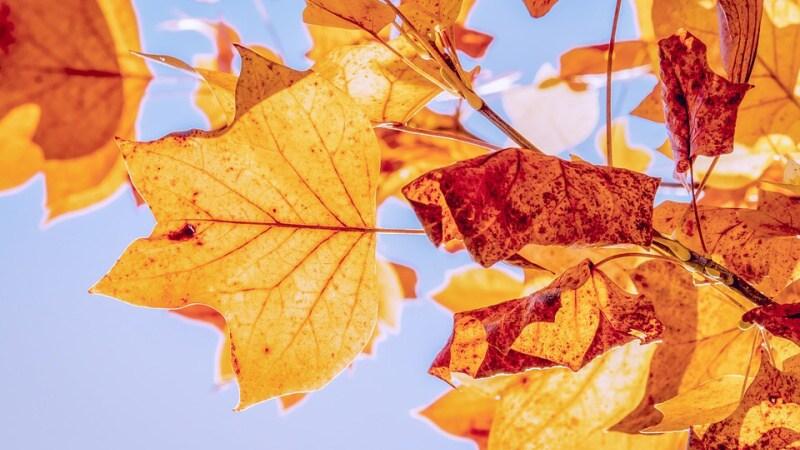 podzimní výlety