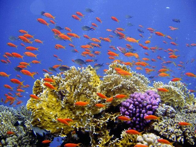 Potápění v Turecku