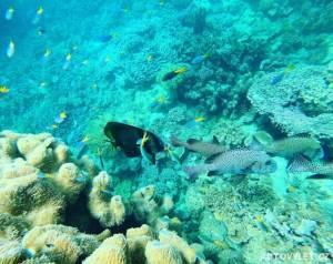Ryby vy moři - Cairns Austrálie