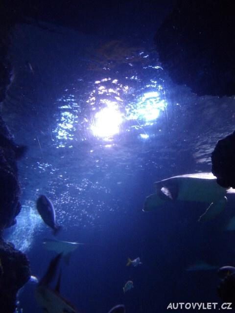 Sea Life London Aquarium 4