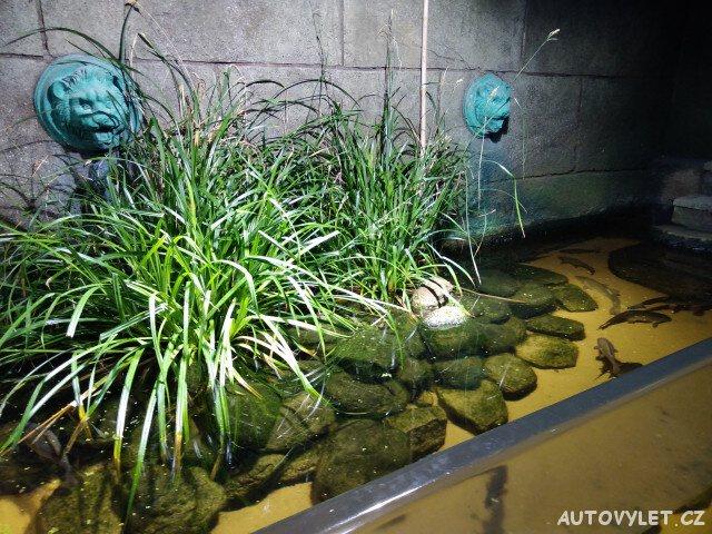 Sea Life London Aquarium 6