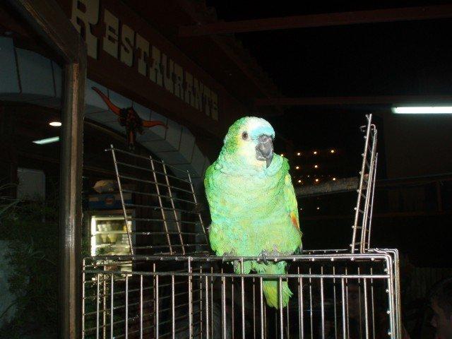 Western Restaurant U papouška