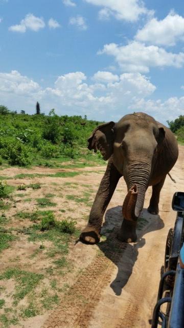 Srí Lanka 3