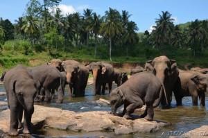 Srí Lanka dovolená 06