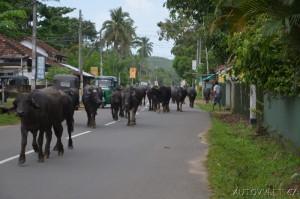Srí Lanka dovolená 11