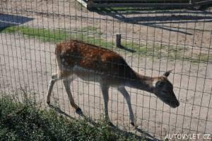Srnka - nová zoo Chleby