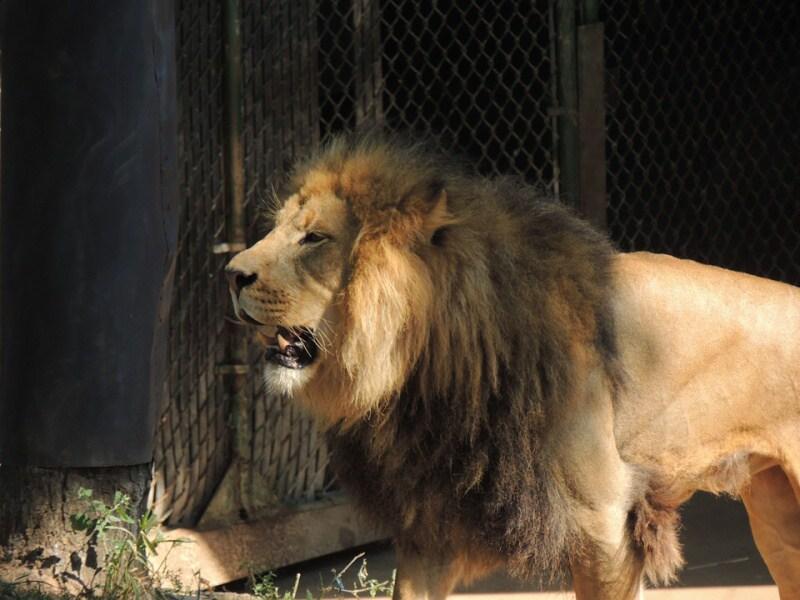 st.louis zoo lev