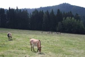 Šumava - Bavorský les 2