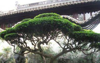 zahrady yu yuan šanghaj