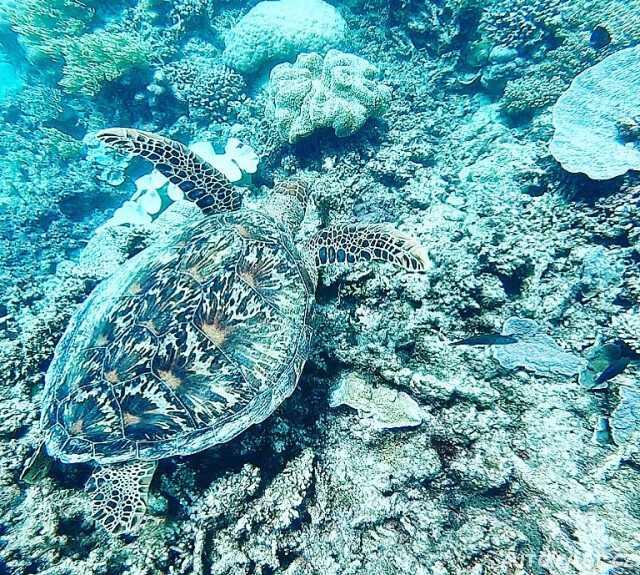Želva - Cairns Austrálie