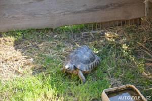 Želva - stará Zoo Chleby