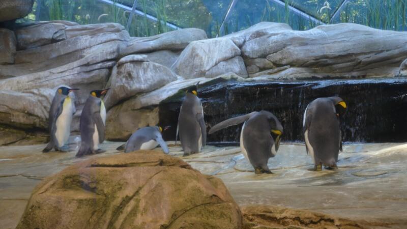 Zoo Berlín tučňáci