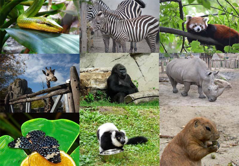 Zoo Budapešť Maďarsko