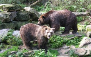 zoo děčín medvědi